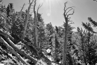 Humphreys and Flagstaff 072 (2)