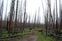 More fire damage from 2011.