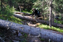 Many fallen trees along the trail at the higher elevations.