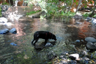 Wet Beaver Crack 035