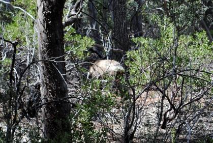 Solder Pass Trail 4-10-18 (113)