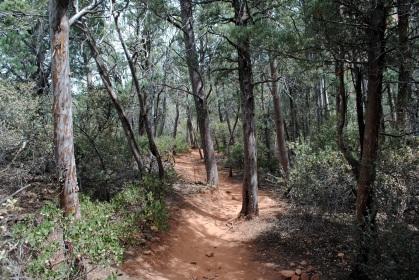 Solder Pass Trail 4-10-18 (53)