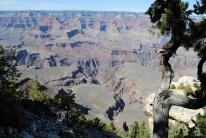 Grand Canyon 4-11-18 (47)